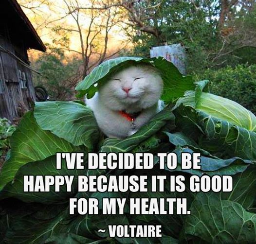 Voltaire - BEing Happy Is Good For Health