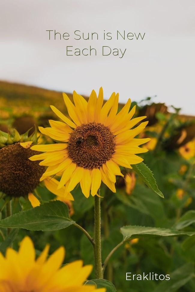 Eraklitos - the sun is new each day